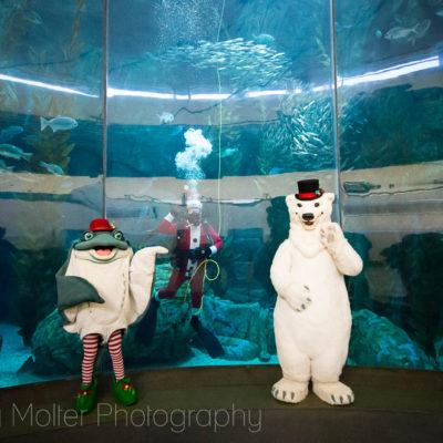 Aquarium of the Pacific Holiday Tree Lighting