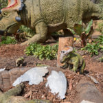 LA Zoo's Dinosaurs Unextinct Exhibits Welcomes Baby Diabloceratops