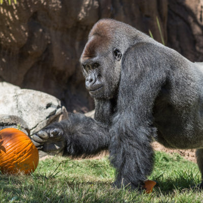 Boo at the Zoo Los Angeles Filled with Fang-tastic Activities