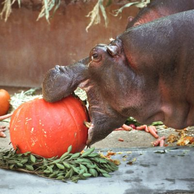 Last Chance! Boo at the Zoo Ends this Weekend