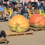 Don't Miss the Irvine Park Railroad's Great Pumpkin Weigh Off