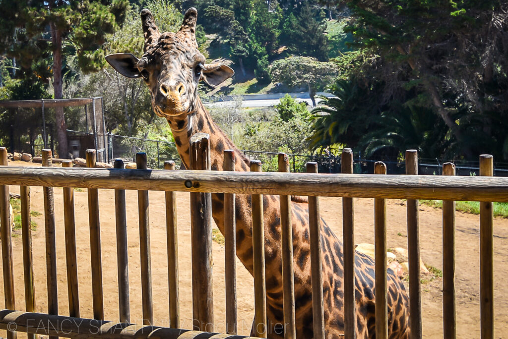 Los Angeles Zoo Photo Day for Photographers