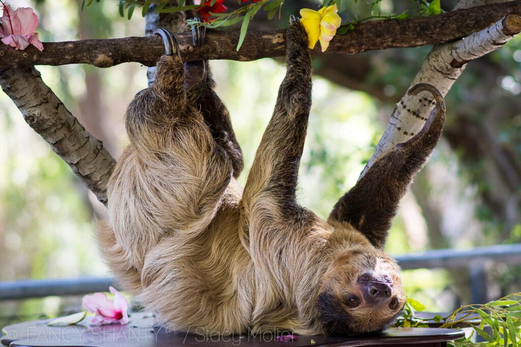LA Zoo Photo Day
