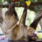 LA Zoo Photo Day 2016