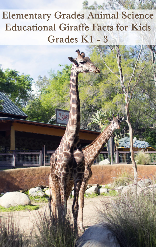Giraffe Facts for Kids - California Unpublished