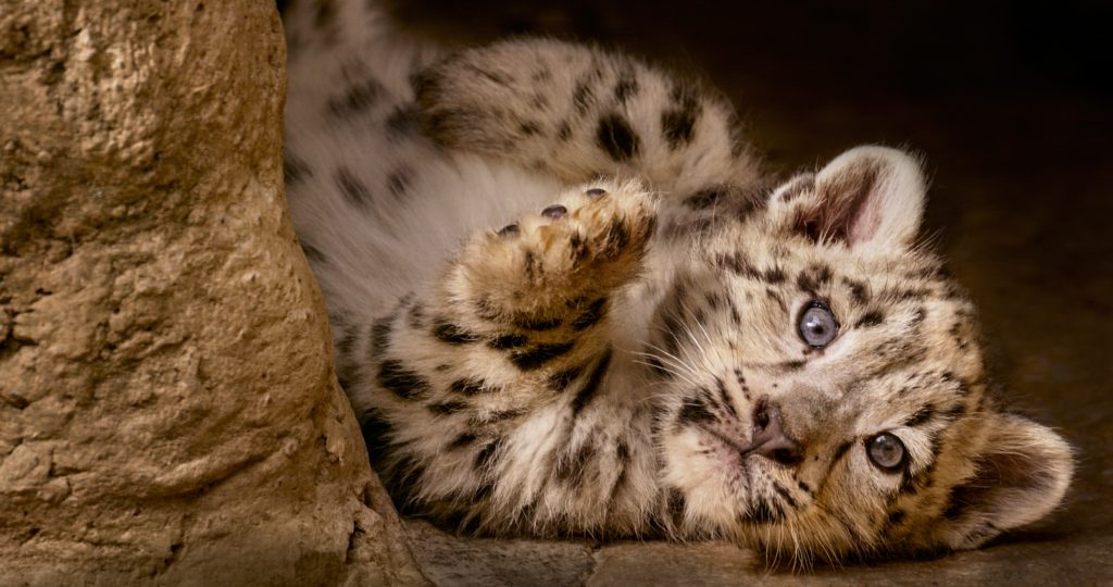 Born In China - The Magic and Mystery of China's Exotic Wildlife