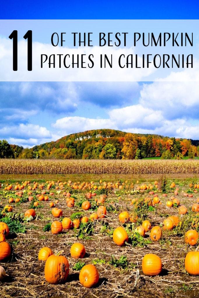 11 Best Pumpkin Patches in California