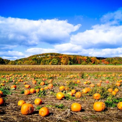 11 Best California Pumpkin Patches