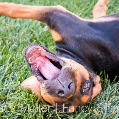 Simple 10-Day Detox for Dogs