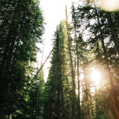 Top Campgrounds in California