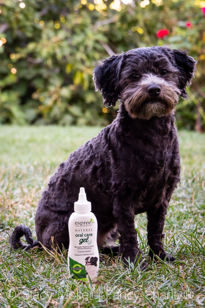 Natural Remedy for Bad Dog Breath