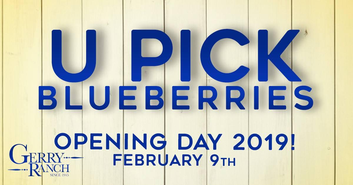 U-Pick Blueberries Opening Day